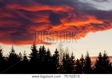Alpenglow over the forest
