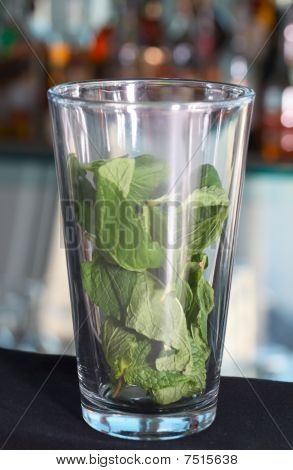 Highball Glass Filled With Fresh Mint Leaves