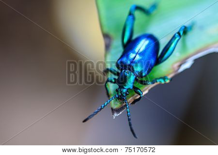 Insect On Green Leaf