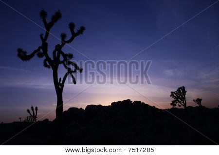 Joshua Tree Silhouette At Sunset With Blue Sky