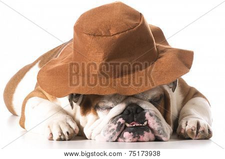 dog wearing cowboy hat on white background - english bulldog