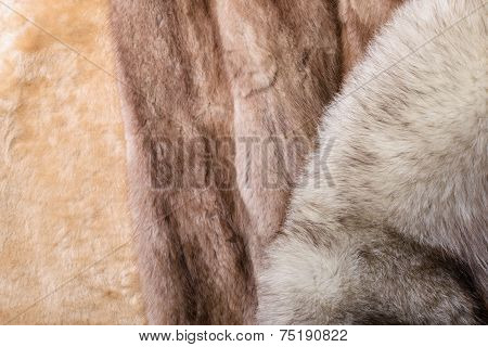 Sheepskin, Mink And Fox Furs