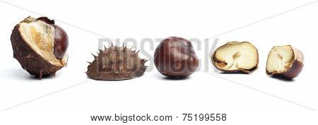 Conkers Or Horse Chestnuts In Capsule