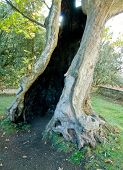 foto of hollow log  - An old tree with empty trunk and a hand coming from the black hole inside - JPG
