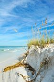 stock photo of sea oats  - Beautiful Sand Dunes and Sea Oats on the Coastline of Anna Maria Island Florida - JPG