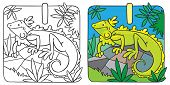 picture of brasilia  - Coloring picture or coloring book of little funny iguana on rock - JPG
