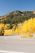 foto of colorado high country  - Yellow aspens abound in Colorado high country - JPG