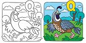 stock photo of quail  - Coloring picture or coloring book of little funny quail running on the field - JPG