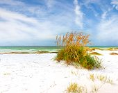 foto of sea oats  - Summer landscape with Sea oats and grass dunes on a beautiful Florida beach - JPG
