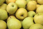 foto of farmer  - Golden Delicious Apples at Farmer