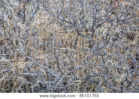 texture background of dry bush with grass in Colorado foothills