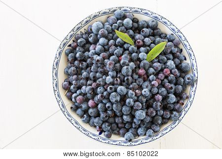 Freshly picked wild low bush  blueberries in a china bowl.