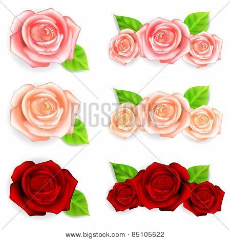 Set Of Roses With Green Leaves
