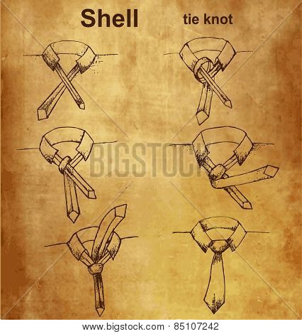 Vector tie and knot vintage instruction, shell tie knot