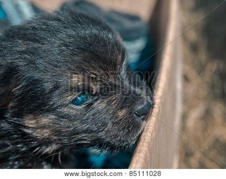 A Little Dark Puppy In A Box