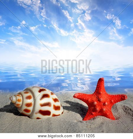 Conch shell with starfish on beach at sunset