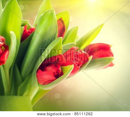 Easter Spring Flowers bunch. Beautiful red Tulips bouquet. Elegant Mother's Day gift over blurred green nature background. Springtime