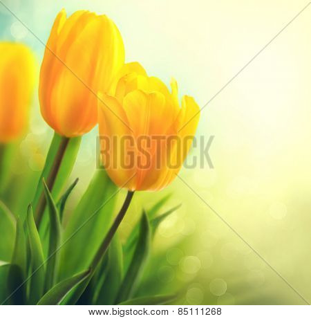 Easter Spring Flowers bunch. Beautiful yellow tulips bouquet. Elegant Mother's Day gift over nature green blurred background. Springtime. Growing tulips