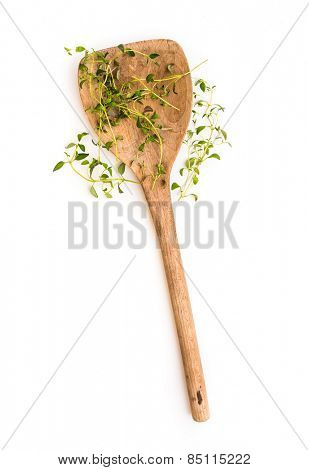 fresh thyme herb on a wooden spoon isolated on white background
