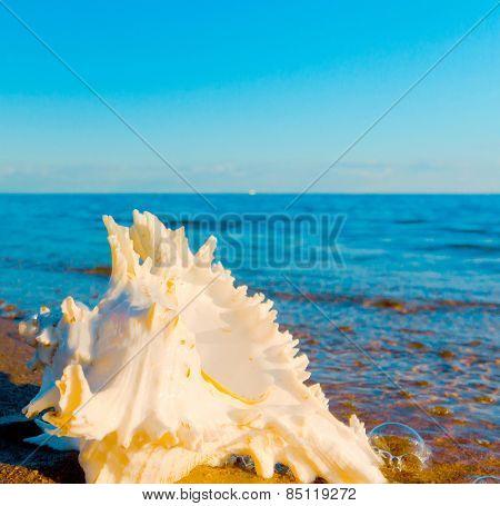 Beach Summer Shore