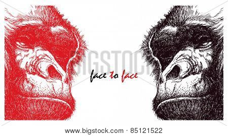 Head gorilla. Hand drawn. Vector illustration. Vector poster