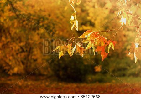 Selective focus on autumn