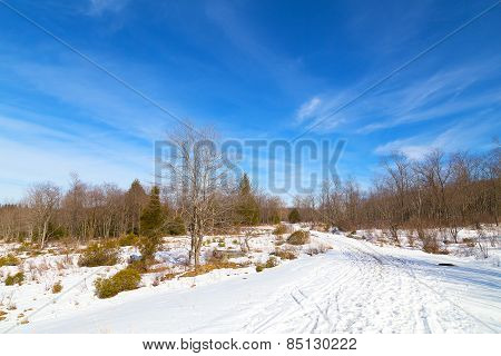 Wintery forest on a sunny day.