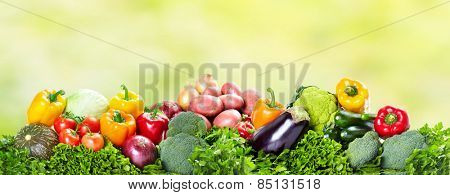 Fresh Vegetables over green background. Healthy diet.