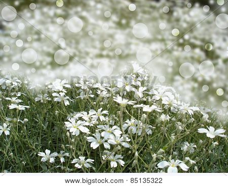 White flowers bokeh