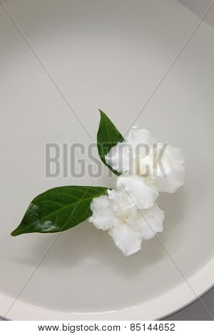 jasmine flowers in the white bowl