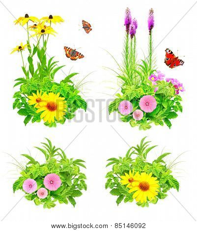 Collection of summer flowers and green leaves. Isolated on white background