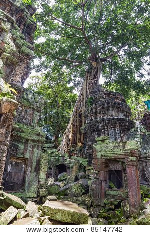 Ancient Ta Prohm or Rajavihara Temple ruins at Angkor, Siem Reap, Cambodia.
