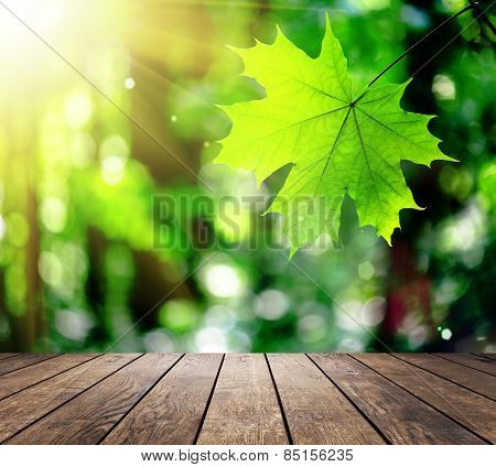 Beautiful sunlight in the autumn forest with wood planks floor interior background