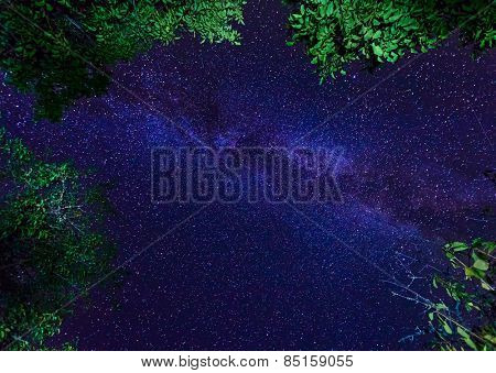 The Milky Way galaxy on night starry sky with trees crown
