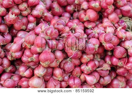 Shallot - Asia Red Onion At The Market
