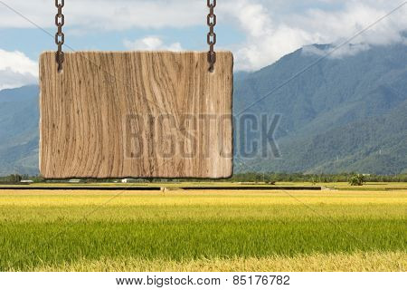 Blank wooden sign on field of paddy farm. Concept of rural, idyllic, tranquility etc.