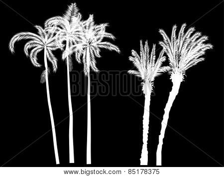 illustration with five palm trees isolated on black background