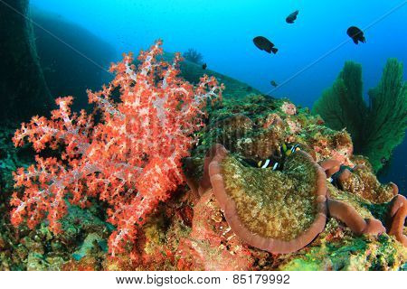 Soft Coral and Anemone