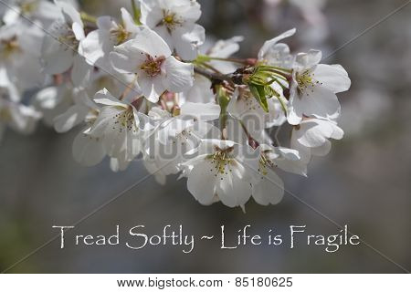 Tread Softly - Life Is Fragile Floral