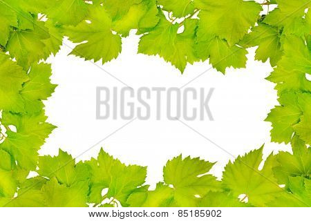 Border of fresh grape leaves isolated on white