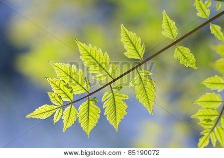 Spring leaf.