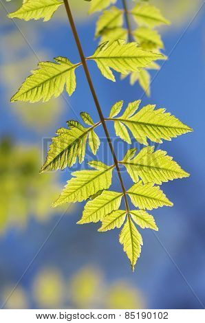 Spring leaf of tree. Nature composition.