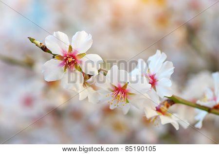 Spring flower on tree. Element of design.