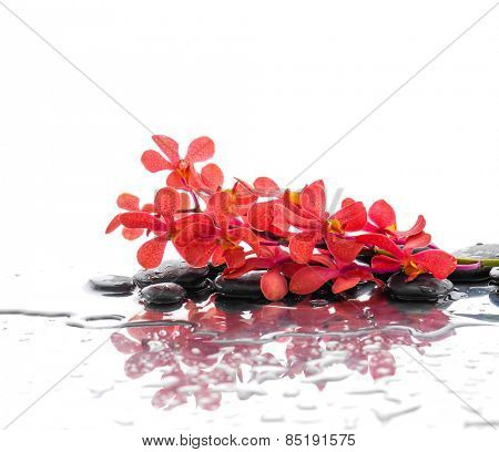 Still life with wet stones with red branch orchid