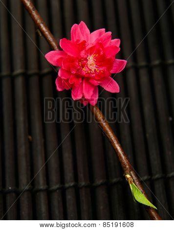 Spring red flowering on mat