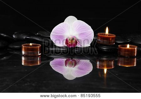 Macro of orchid with candle therapy stones