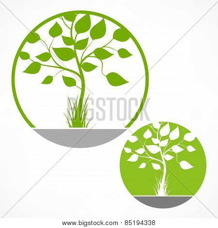 Tree With Green Leaves In Round On White