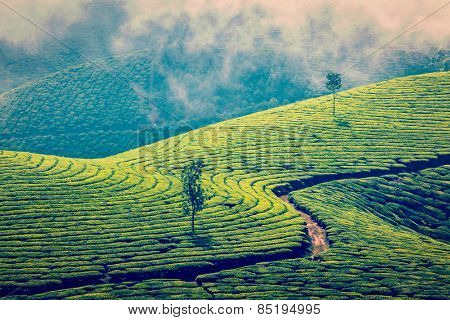 Vintage retro effect filtered hipster style image of Kerala India travel background - green tea plantations in Munnar, Kerala, India - tourist attraction