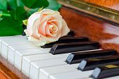 pic of grand piano  - Single pink rose lay on the keys of a grand piano - JPG