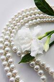 stock photo of jasmine  - jasmine flowers and pearl necklace - JPG